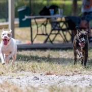 Help Shelter Pets 2 - FoMA Pets