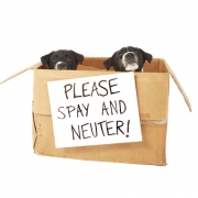 Please Spay and Neuter - FoMA Pets