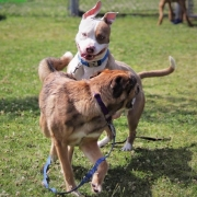 Help Shelter Pets 3 - FoMA Pets