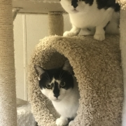Help Shelter Pets 15 - FoMA Pets
