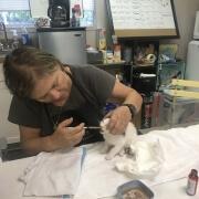 Volunteers 12 - FoMA Pets
