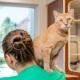 Volunteers 13 - FoMA Pets