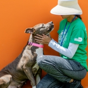 Volunteers 14 - FoMA Pets