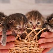 Newborn kittens - FoMA Pets