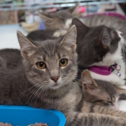 Homeless kittens - FoMA Pets
