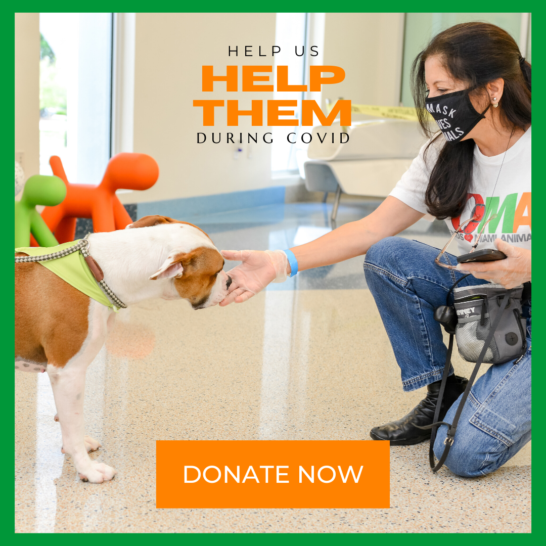 Help Us Help Them - FoMA Pets