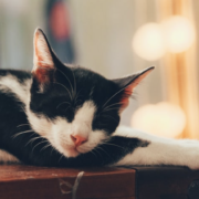 Finding Pet Friendly Housing In Miami Dade County