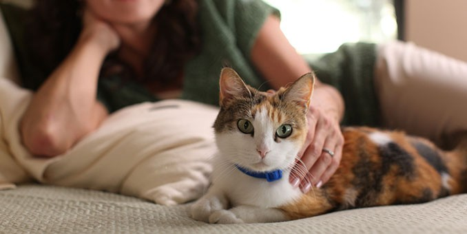 Cat Home Training - FoMA Pet