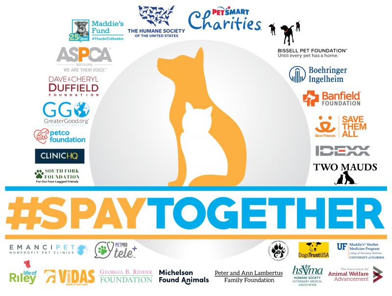 #SPAYTOGETHER STIMULUS FUND - FoMA