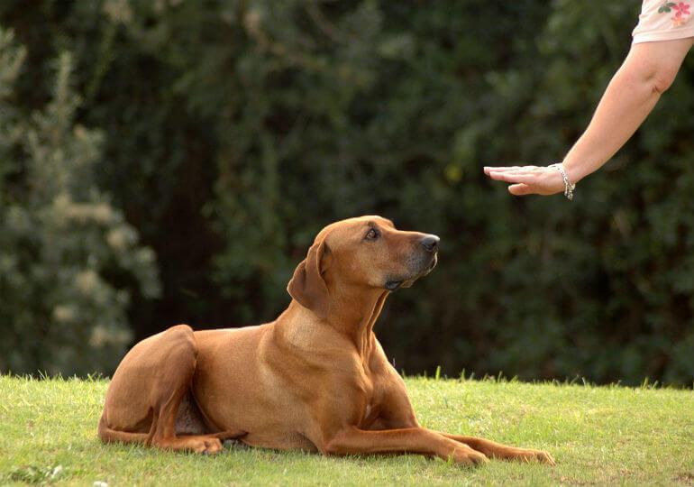 Dog Home Training - FoMA Pets