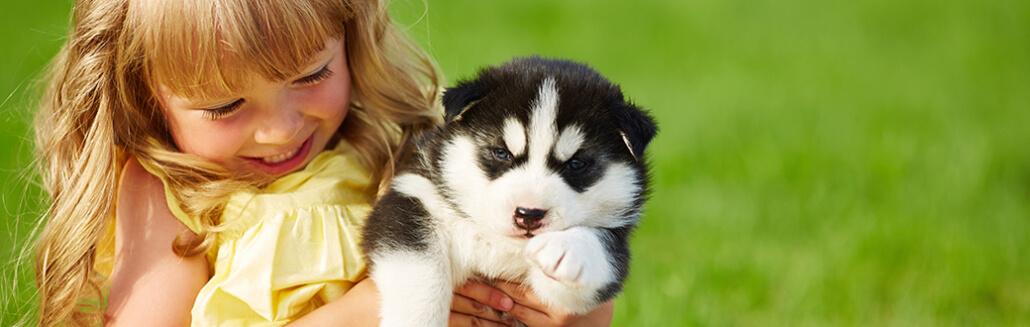Trained Dog - FoMA Pets