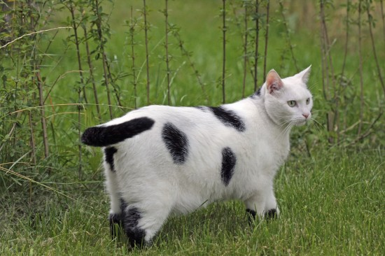 Pet Obesity - Physical Evaluation