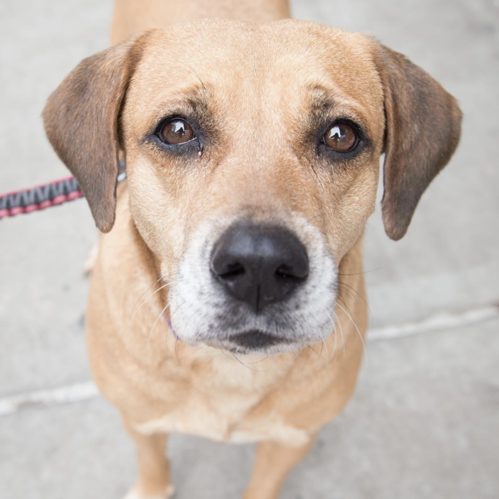 Shelter Wish Lists for the Holidays - FoMA Pets