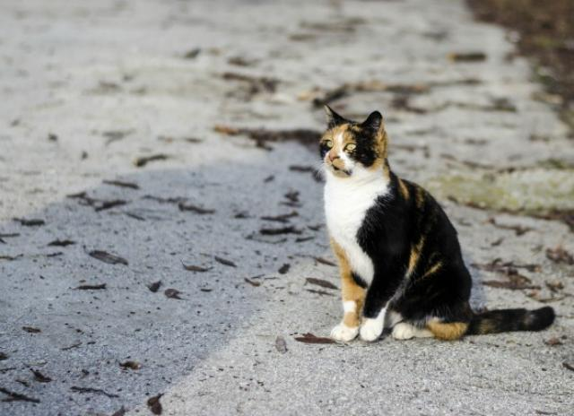 What to do if You Lose Your Pet - That's not mine