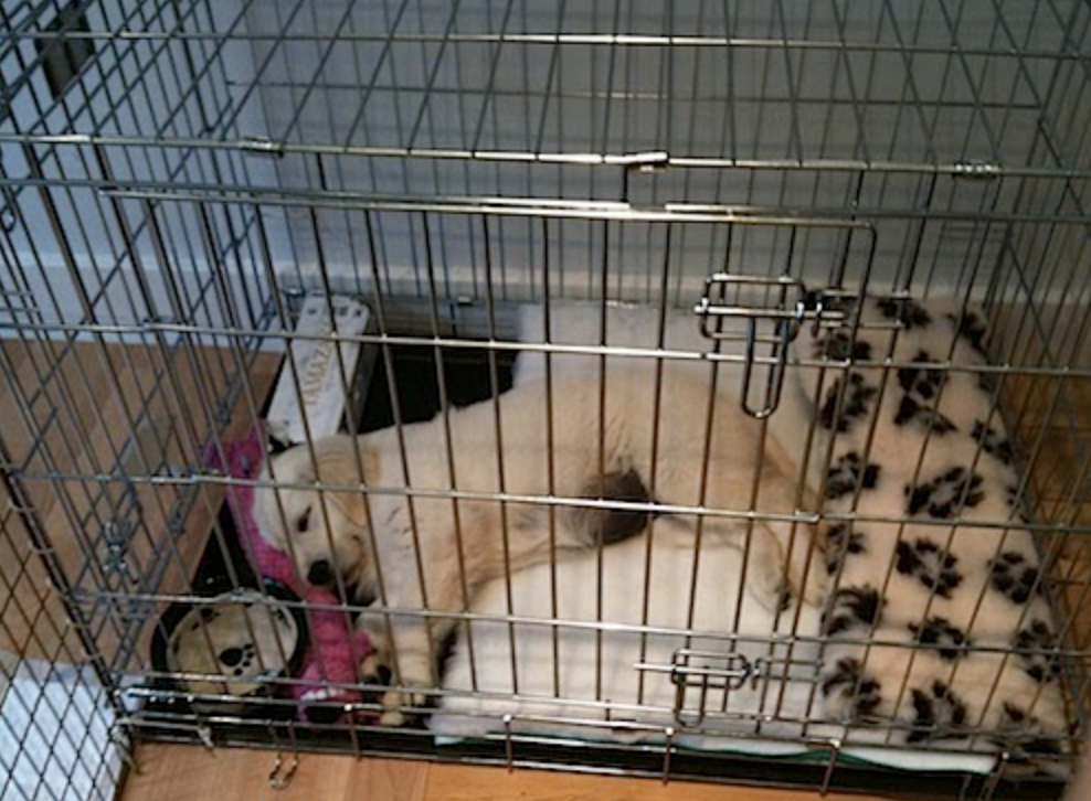 How to Crate Train Your Dog - Benefits of Crates