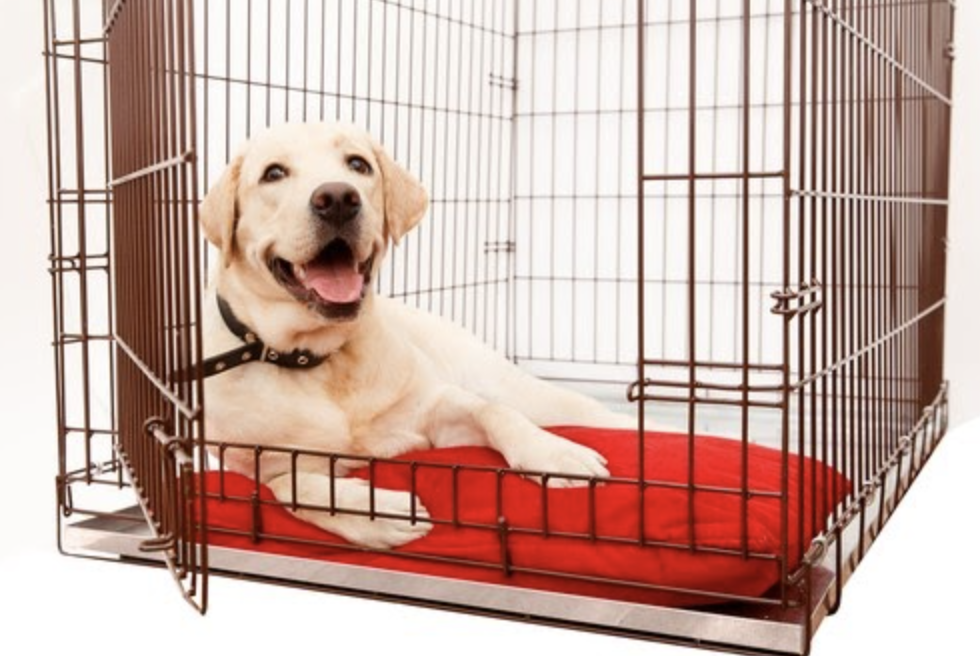 How to Crate Train Your Dog - Happy Dog