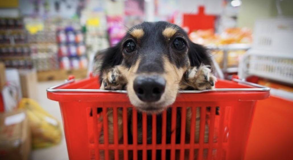 Bucket List for Your Pet - Shopping with company