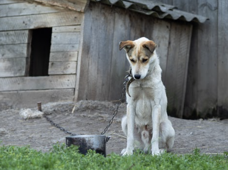 Alternatives to Chaining Your Dog Outside? - FoMA Pets