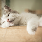 How Long Does it Take for a Cat to Get Used to a New Home - FoMA Pets