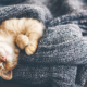 What is the Best Cat for Someone with Allergies? - FoMA Pets