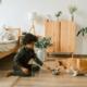 Adopting a Shelter Pet - FoMA Pets
